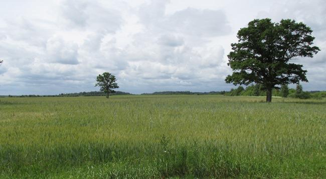 medis laukuose